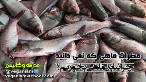 مضرات ماهی