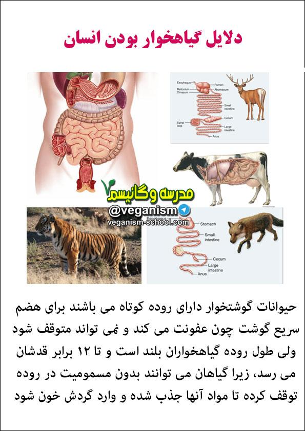 فرق گیاهخوار و گوشتخوار
