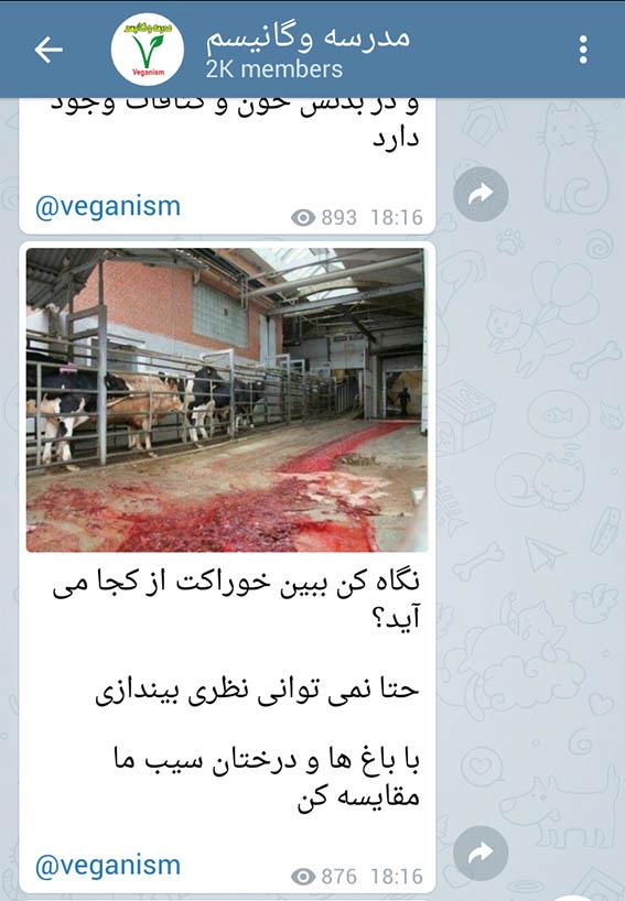 مضرات گوشت